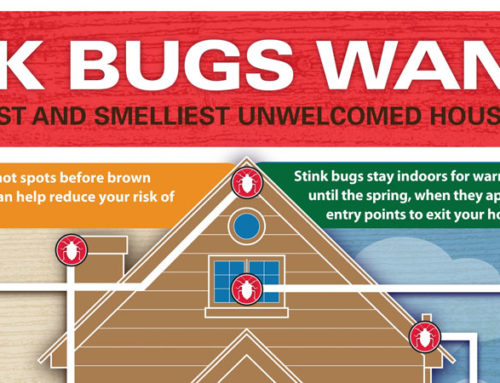 Get Rid of Bugs and Insects