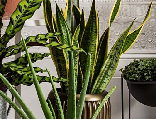 8 Houseplants That Give You a Breath of Fresh Air