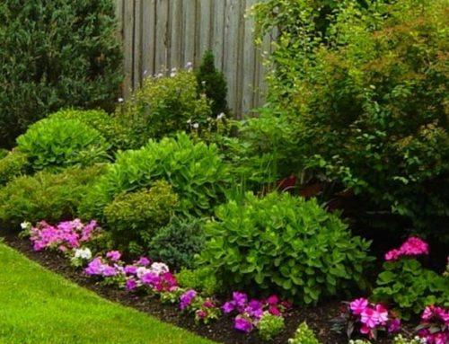 10 Tips for Saving Money in the Garden